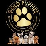 Goldpuppies